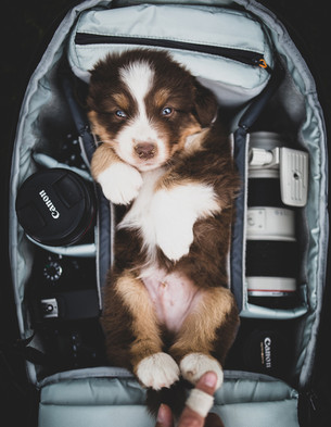 Backpack Puppy