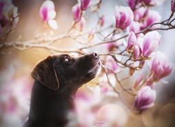 Mira Magnolia
