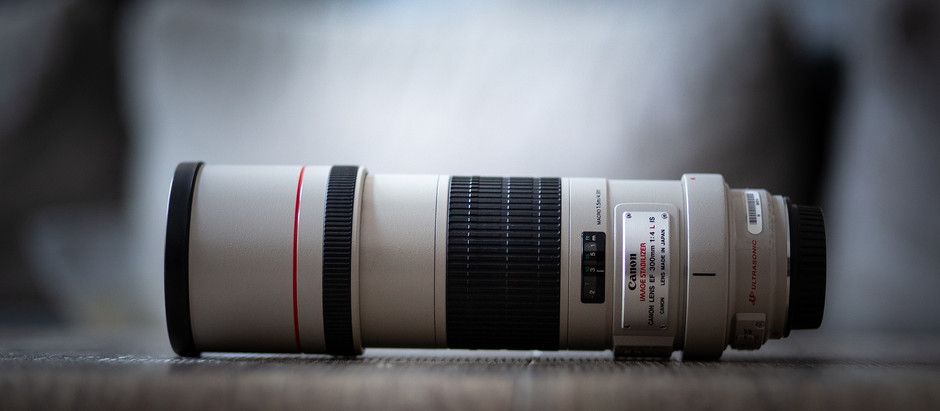 Das Canon EF 300mm f/4L IS USM in der Hundefotografie