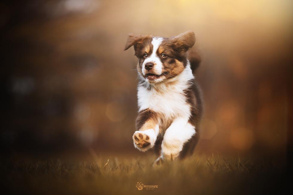 Indian Summer Puppy