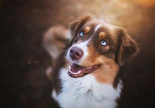 Hundefotografie6.jpg