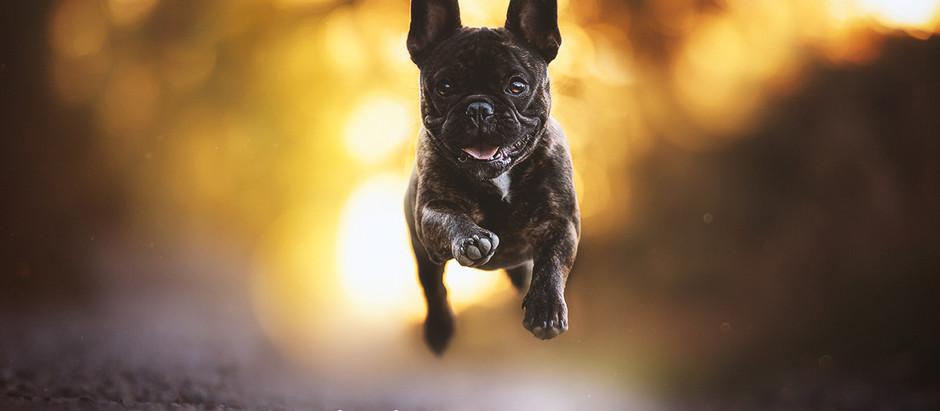 Bildbearbeitung in der Hundefotografie
