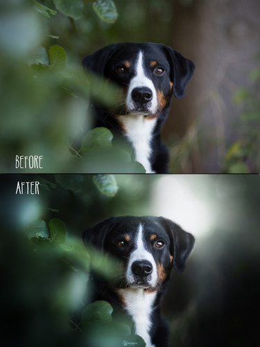 Before_After29.jpg