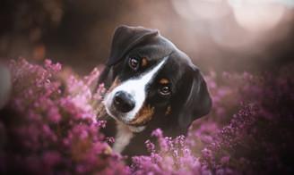 Hundefotografie_leipzig5_edited.jpg