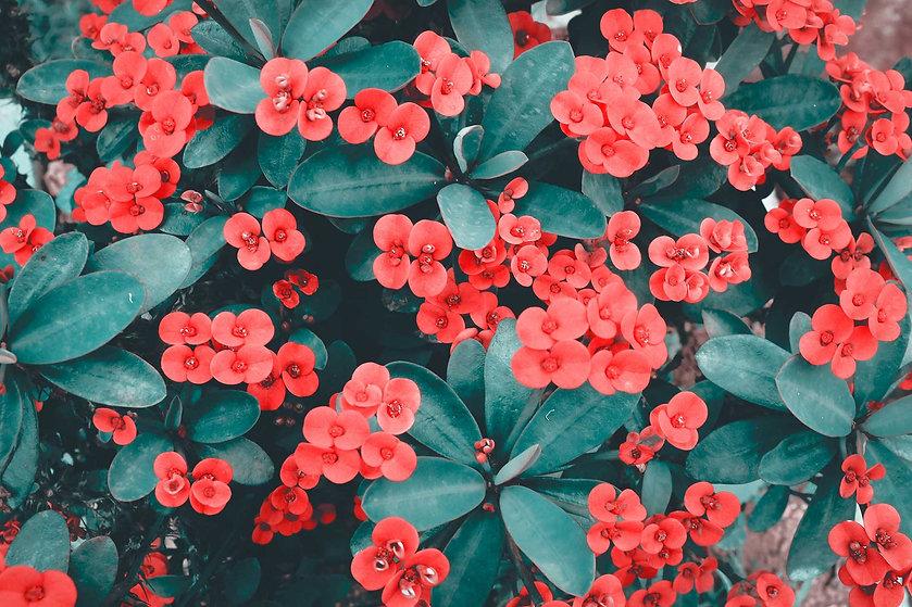 redflowers_web.jpg