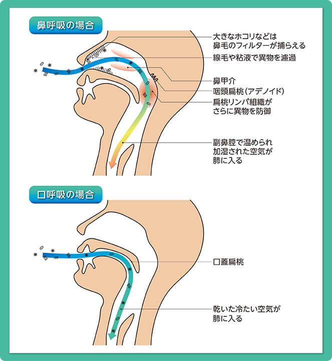 hanakokyu_kuchikokyu.jpg
