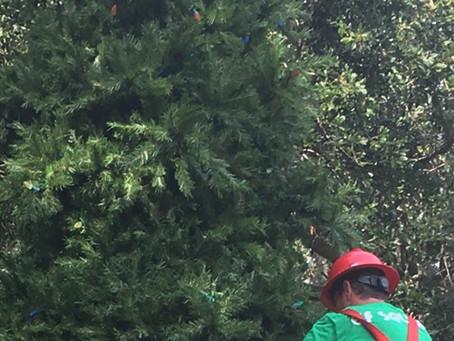 Santa's Helper Joins Safety Harbor City Staff