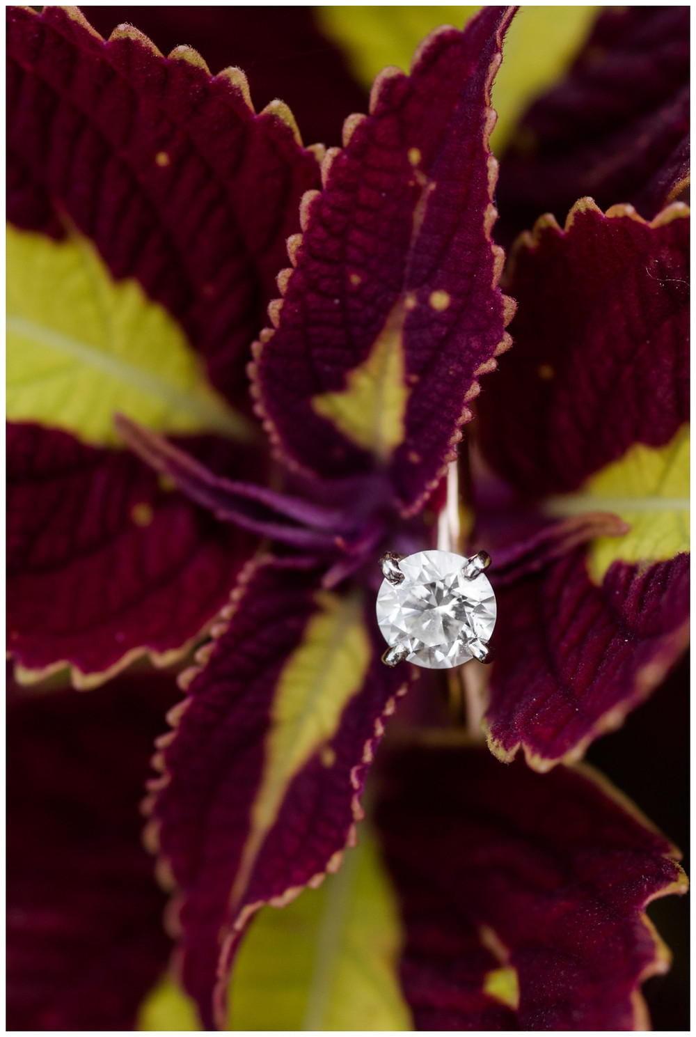 engagement-ring-in-read-flower-at-downtown-green-bay-engagement-session-by-milwaukee-wedding-photographer-kyra-rane-photography