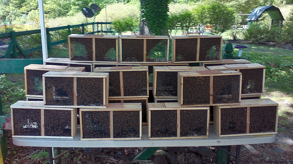 3 lb package: Honey bees & mated queen (Italian)