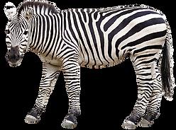 zebra-4864906_640.png