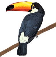toppng.com-toco-toucan-touca-504x510.png