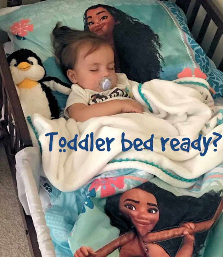 Little Bell Sleep Solutions, when should I transition baby to toddler bed, when should I transition my baby to a toddler bed, toddler bed transition, is my child ready for a toddler bed