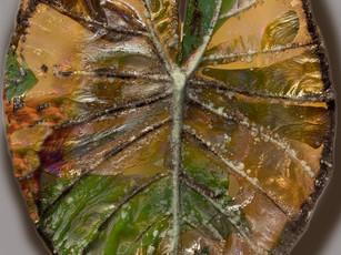 Large Aroid Leaf