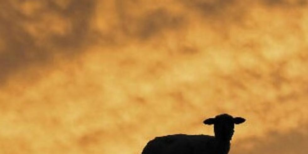 The Lamb Through Scripture
