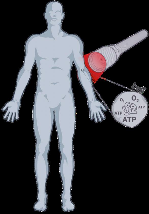 Tekening persoon ATP Safe Laser.png