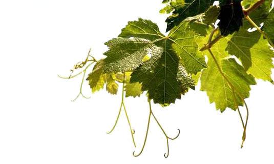 le lien par le vin contact
