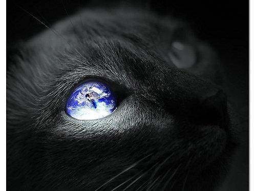 Black Cat Art Print - World Seen Through A Cats Eye - High Resolution 8x10 Photo