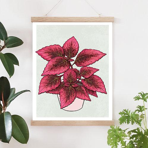 Palettblad Mariposa