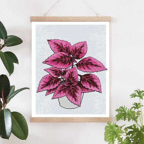 Palettblad Plantor