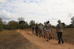 Guided bush walks