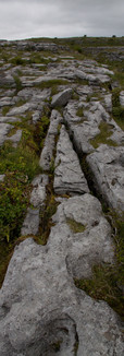 Burren vegetation.jpg