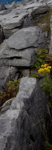 Flowering Burren.jpg