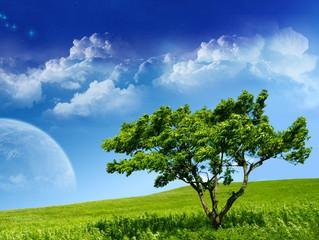 Lembre-se Da Árvore Da Vida.