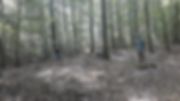 GBY forest image.PNG