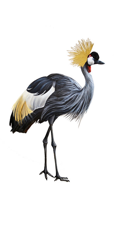 """Grey-Crowned Crane 1"""