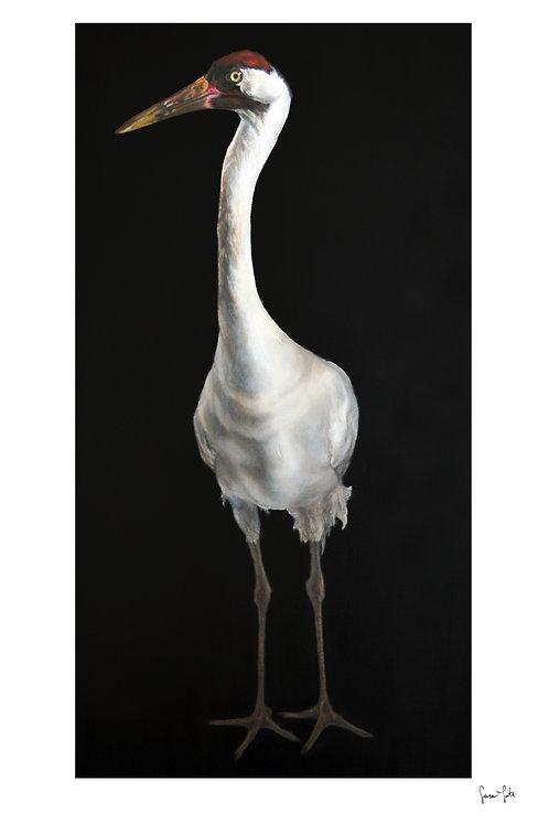 """Niles Crane"" Print"