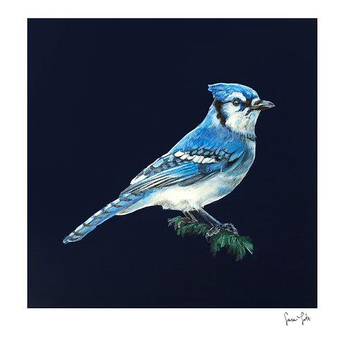 """Blue Jay"" Print"