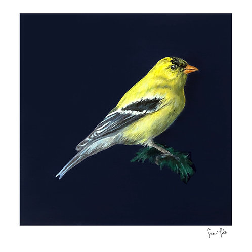 """Goldfinch"" Print"