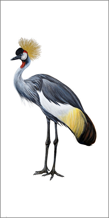 """Grey-Crowned Crane 2"""