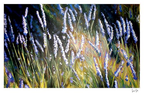 """Lavender in Lacoste"" Print"