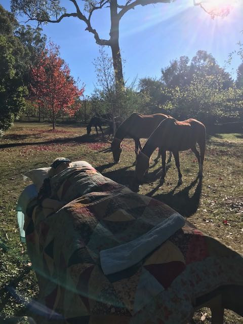 Healing in the presence of horses