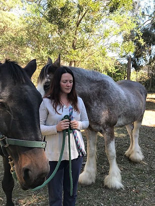 Horse Therapy or Equine Therapy or Equine-Assisted Therapy - Heart of The Horse
