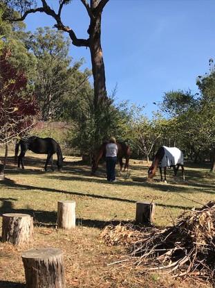 Healing with the Herd