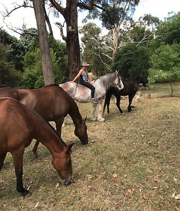 Equine Horse Therapy Victoria - Equine-Assisted Therapy in Australia