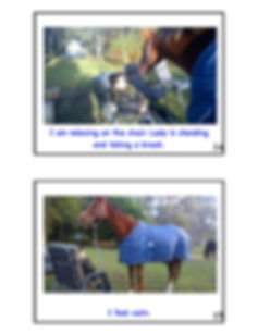 Heart of the Horse-page-008.jpg