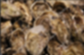 Oyster beds.png