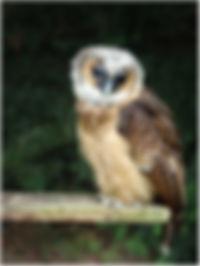 owl IMG_8538.jpg
