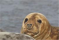 a seal IMG_7891 FB.jpg