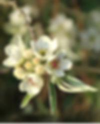 fb%20a%204%20IMG_7340_edited.jpg