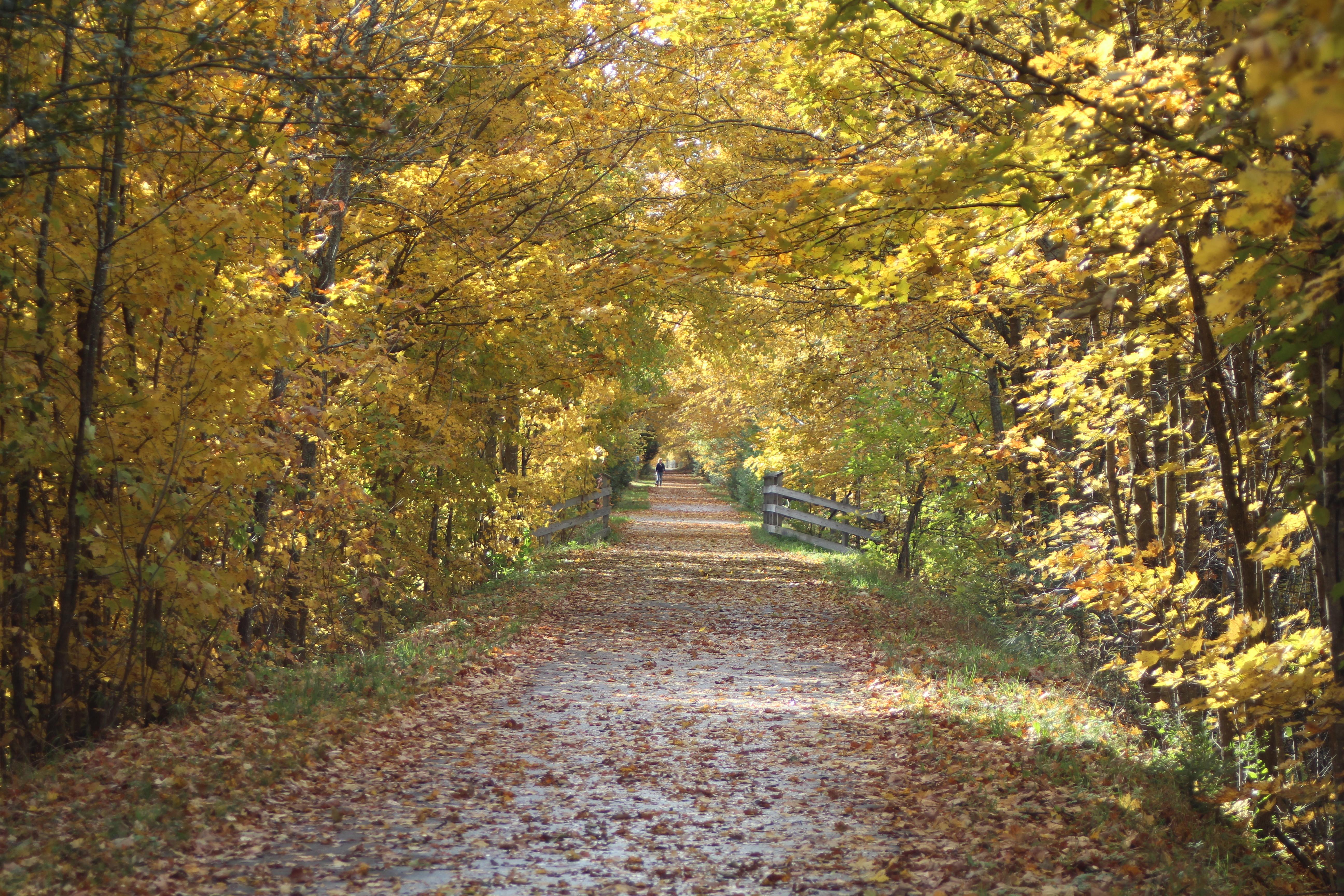 SB Trail 3