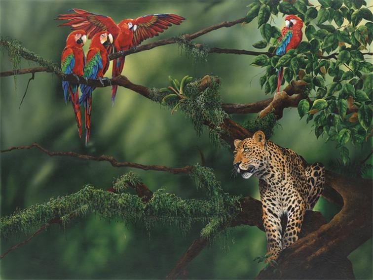 Macaws and Jaguar