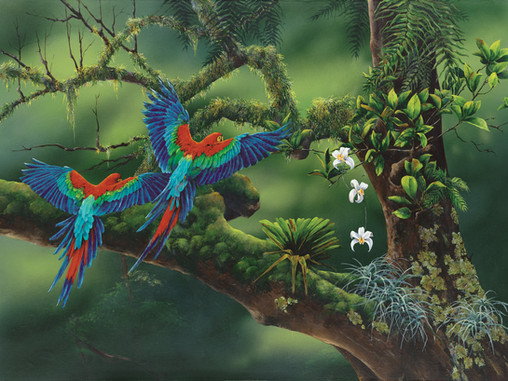 Macaws of the Cloud Forest