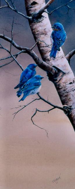 Mountain Bluebirds 10 x 18 Watercolor