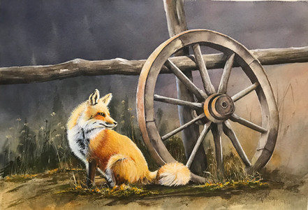 Country fox