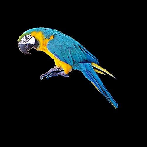 Render Arara Blue  - Premium Design 3D (
