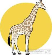Giraffe1_edited.jpg